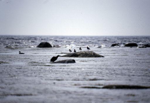 العثور على سفينة روسية فقد اثرها في البحر الابيض