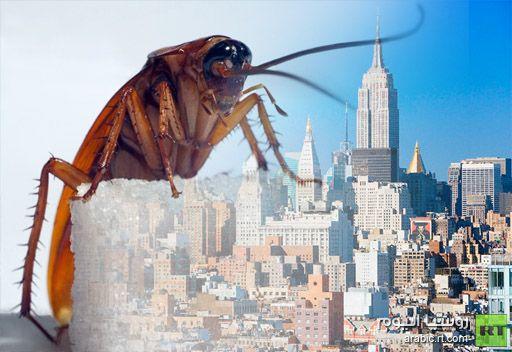 حديقة حيوانات أمريكية تقترح إطلاق اسم العشاق على صراصير