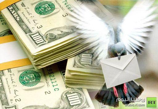 مزاد لبيع حمام زاجل يسجل ثمن الطائر الأغلى بمئات آلاف الدولارات