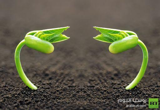 علماء أستراليون: النباتات تتحدث