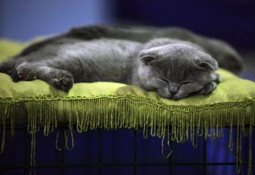 فضلت 550 قطة على زوجها فانفصلت عنه