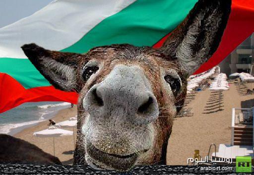 حزب بلغاري يرشح حمارا لمنصب عمدة مدينة فارنا