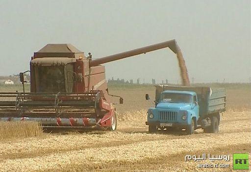 أسعار القمح العالمية تواصل ارتفاعها