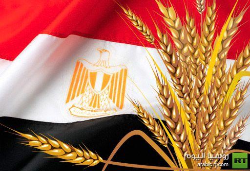 مصر تشتري 240 الف طن من القمح الروسي