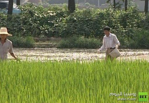 الفاو: ارتفاع أسعار الغذاء في الشهر الماضي
