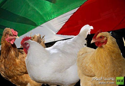 فلسطينيو الضفة ينضمون للسعوديين ويقاطعون الدجاج بسبب غلاء سعره