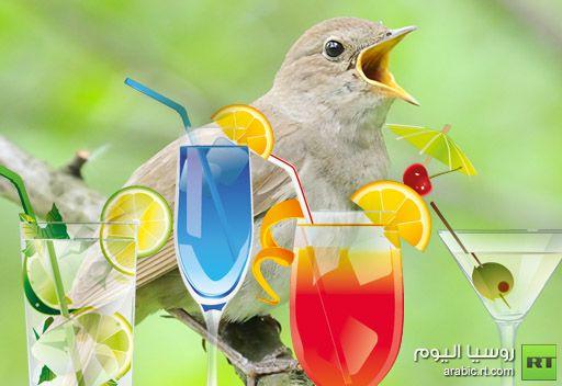 الكحول تؤثر على قدرات الطيور المغردة في ابتكار الألحان وتجعل أصواتها أسوأ