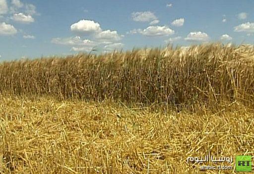 السعودية تخطط لزيادة مخزونها الإستراتيجي من القمح