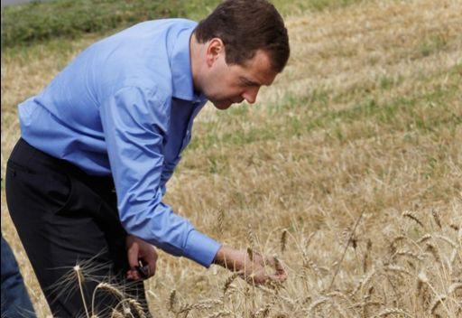 رئيس الوزراء الروسي يكلف وزير الزراعة بالتدخل في سوق الحبوب لكبح ارتفاع الأسعار