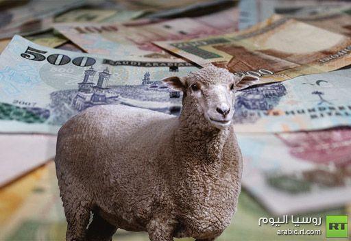 مغردون يسخرون من دفع 400 ألف ريال مقابل خروف ويتمنون لو تم التبرع بثمنه لأهل غزة وسورية