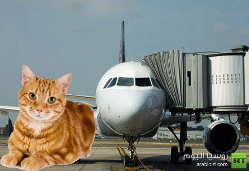 مطار الرياض .. قطة تتسبب في تأجيل رحلة لـ 3 ساعات