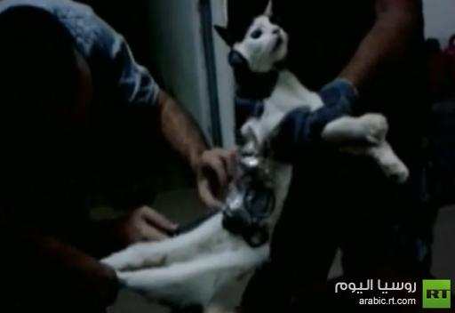 حراس سجن برازيلي يمسكون بقط يحمل ادوات للسجناء