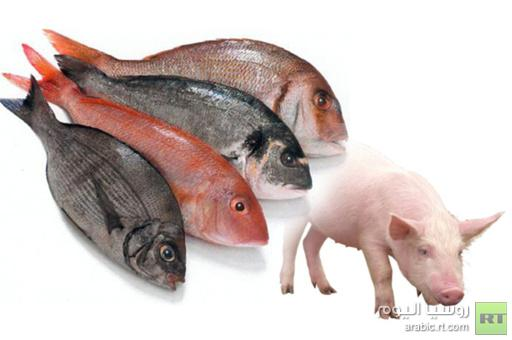 داعية كويتي يحرم أكل السمك الذي تغذى بمخلفات الخنزير