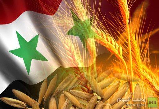 منظمة الزراعة العالمية تتوقع مزيدا من تراجع إنتاج القمح في سورية