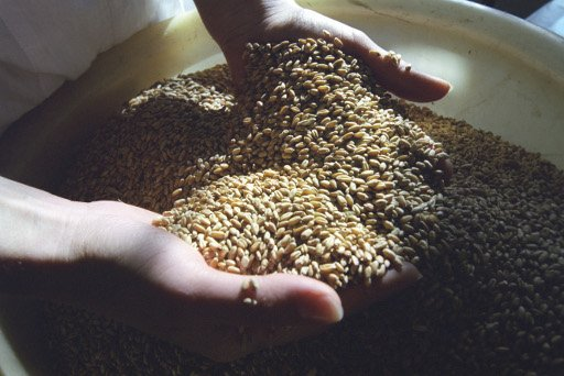 رئيس اتحاد منتجي الحبوب الروسي: روسيا يمكن ان تحافظ على حصتها في توريدات الحبوب الى مصر