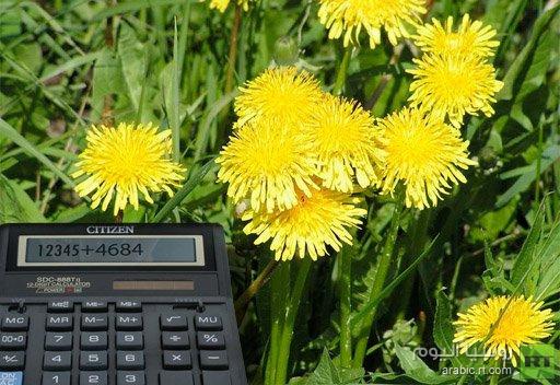 دراسة: النباتات تتمتع بالقدرة على الحساب تساعدها في البقاء على قيد الحياة