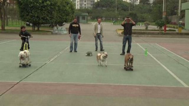 فيديو .. كلاب تتزحلق على الواح