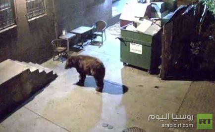 بالفيديو: دب يسرق حاوية قمامة تابعة لمطعم في امريكا