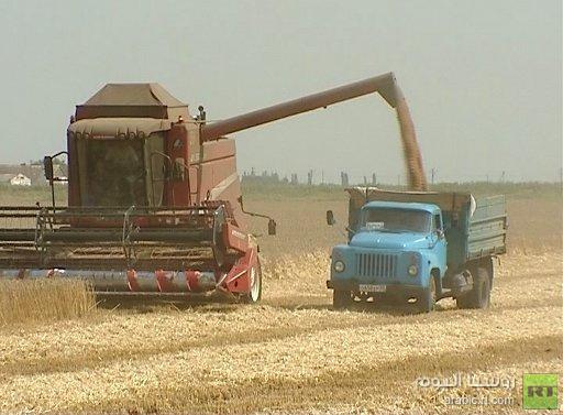 مصر تطرح مناقصة لشراء القمح من موردين عالميين