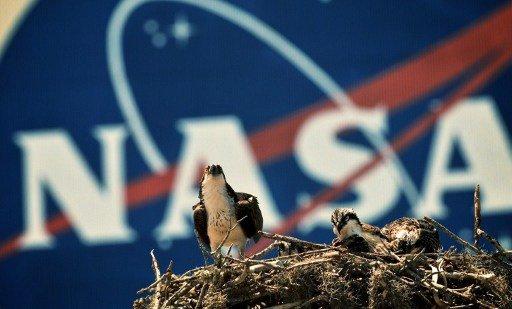 وكالة ناسا تدفع 18 ألف دولار لمن يتطوع بالرقود في سرير مختبري لسبعين يوماً