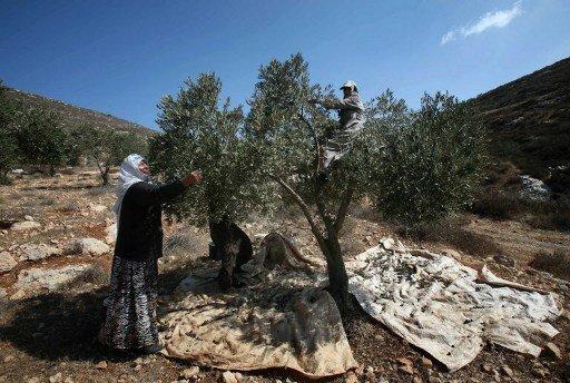 الحكومة الفلسطينية تسعى للحصول على دعم بقيمة 500 مليون دولار