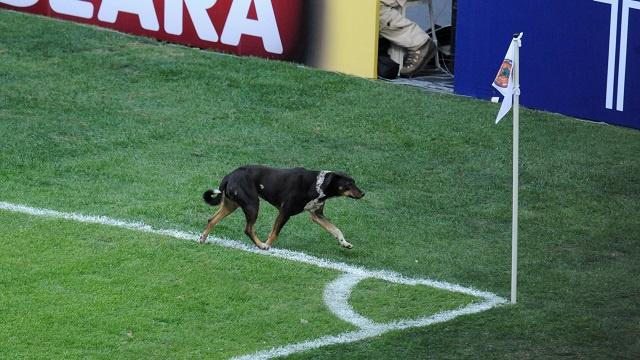 بالفيديو.. كلب يحرز هدفاً برأسية رائعة