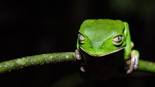 باحثون يعلنون اكتشافهم 60 صنفا جديدا من الحيوانات في أدغال سورينام