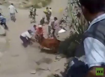 بالفيديو .. ثور العيد يصارع وينجو من موت محقق في اليمن