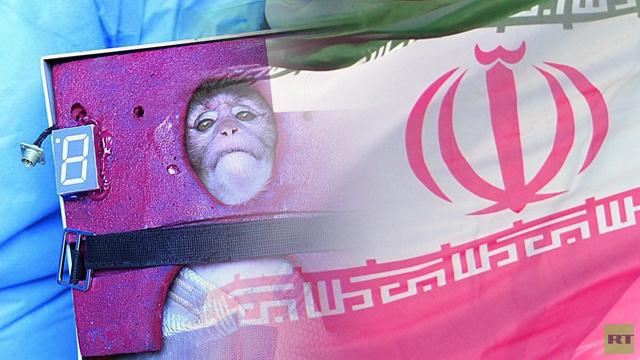 إيران تتخلى عن فكرة إرسال قط إلى الفضاء وتختار قردا آخر لهذه المهمة