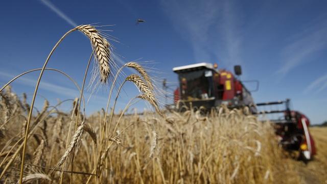 روسيا تجني 85.4 مليون طن من الحبوب
