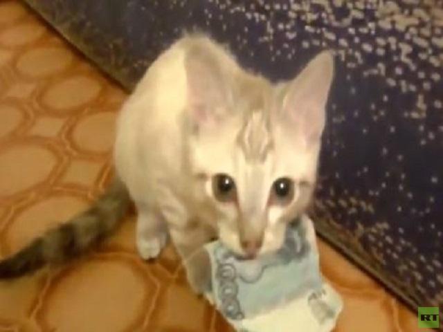 بالفيديو .. قطة عنيدة ترفض إعادة المال إلى أصحابه