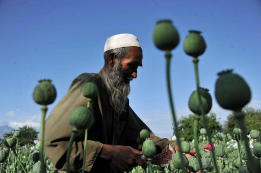 الأمم المتحدة: محصول قياسي للأفيون في أفغانستان