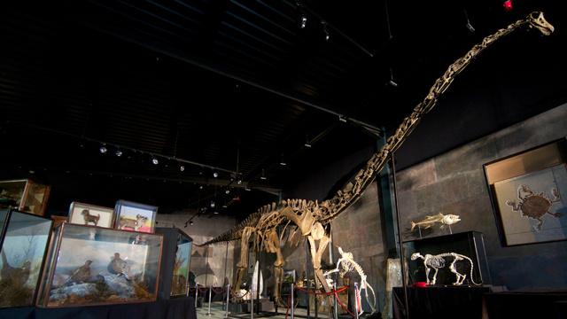 بيع هيكل عظمي لديناصور عملاق بمبلغ 650 ألف دولار