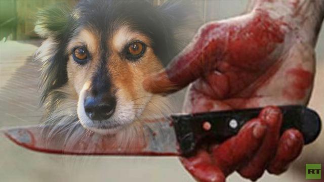 وفاء الكلب يقتله أحيانا