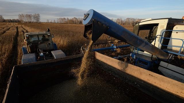 محصول الحبوب الروسي هذا العام تجاوز 95 مليون طن