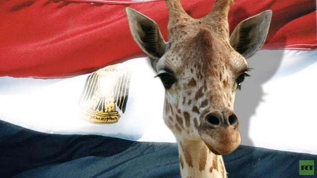 وزير الزراعة المصري يأمر بالتحقيق في