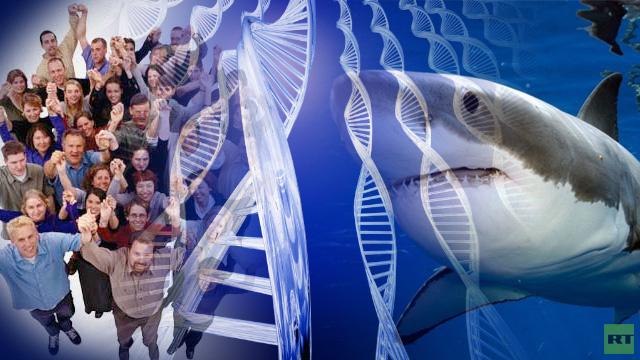 اكتشاف شبه وراثي بين الإنسان والقرش