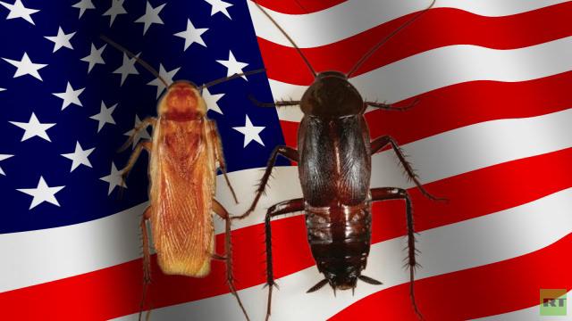 الصراصير التركستانية تزيح الصراصير السوداء في الولايات المتحدة بفضل الإنترنت