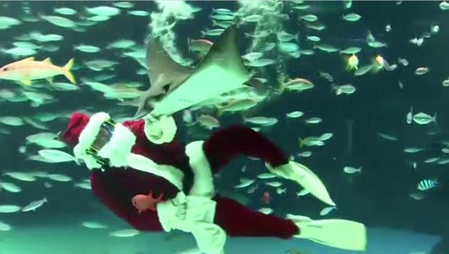بالفيديو... غطاس بملابس سانتا كلاوس يطعم الأسماك في حوض بمدينة طوكيو