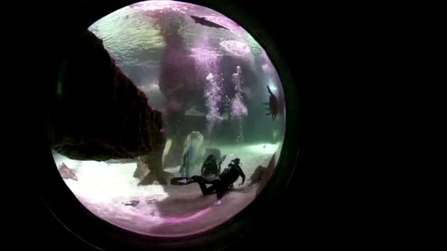 مدريد تحتفل بميلاد المسيح هذا العام مع أسماك القرش (فيديو)