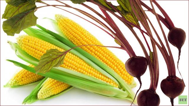 روسيا تجمع محصولا قياسيا من الذرة والشوندر