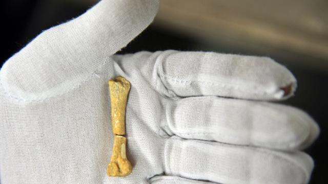 العثور على رفات سلف الانسان المعاصر عمرها 1.42 مليون سنة