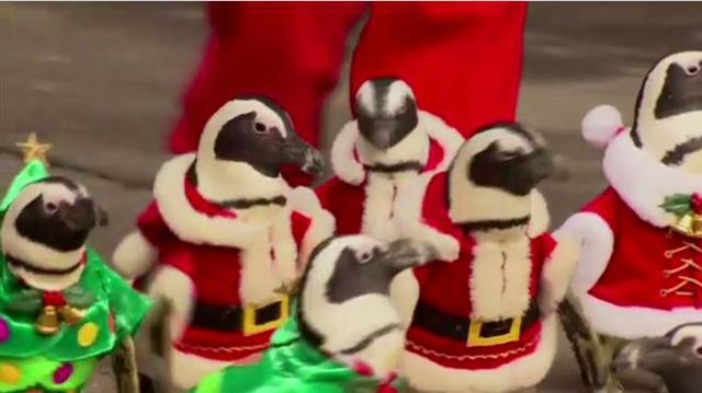 بالفيديو.. بطاريق للاحتفال بأعياد الميلاد بكوريا الجنوبية