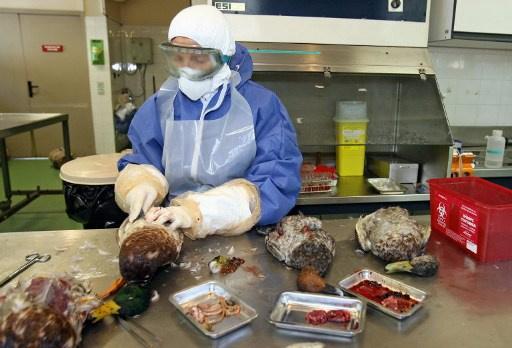 وفاة سيدة بالصين بعد اصابتها بسلالة جديدة من انفلونزا الطيور