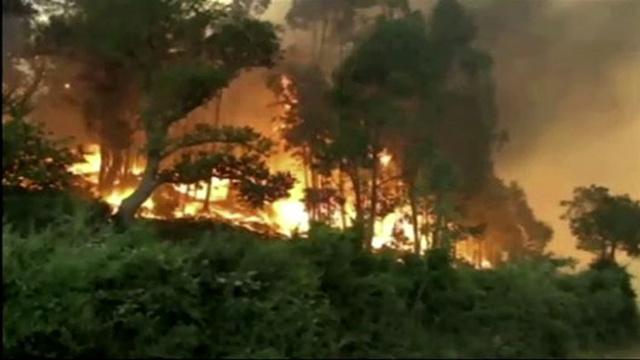 بالفيديو... الحرائق تأتي على مساحات كبيرة من الغابات جنوب شيلي