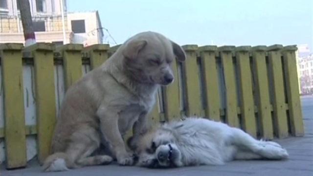 بالفيديو .. كلب يعتصر قلبه الحزن في وداع صديقه