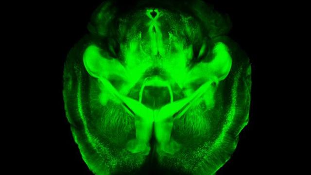 اختيار أفضل 10 اكتشافات علمية لعام 2013