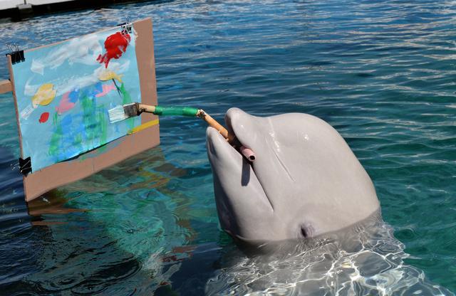 سمك الحفش (بيلوجا) ترسم صورة باستخدام فرشة رسم خاصة في متحف السمك