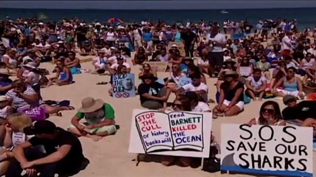 بالفيديو.. مظاهرة حاشدة على سواحل استراليا لإنقاذ أسماك القرش