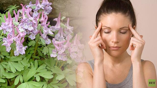 دواء نباتي قد يحل محل الأدوية التقليدية لإزالة الألم